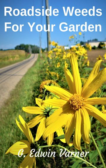 Roadside Weeds For Your Garden