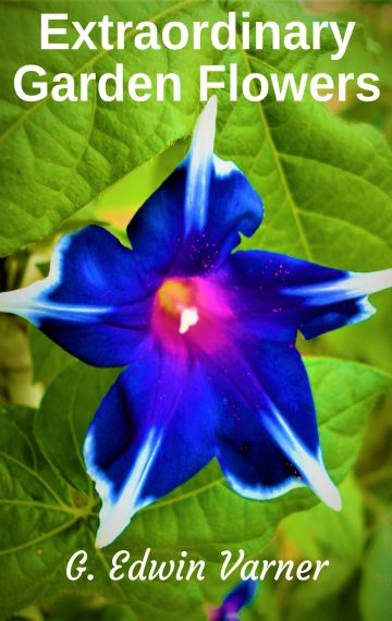 Extraordinary Garden Flowers